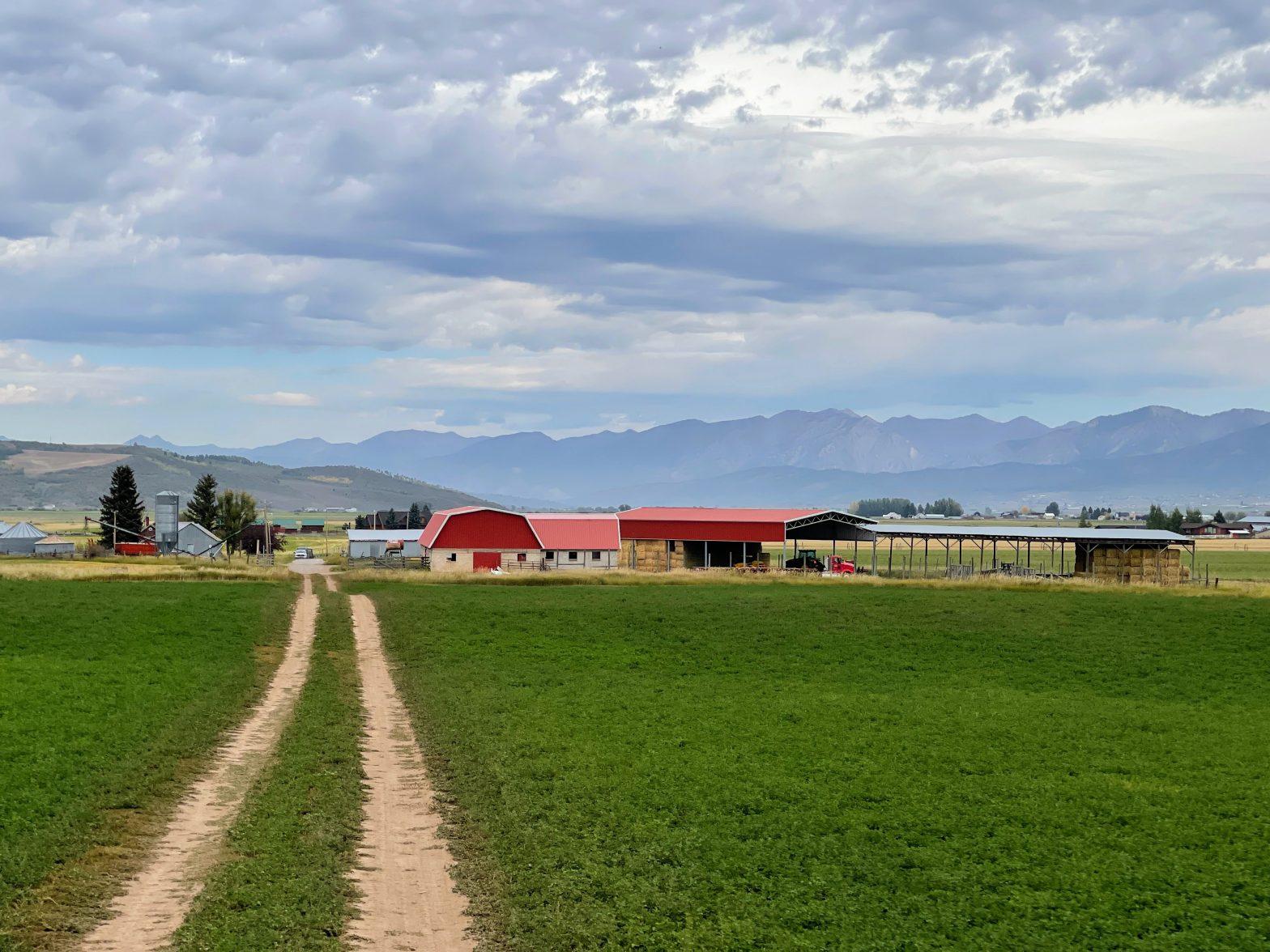 Fields with the farm